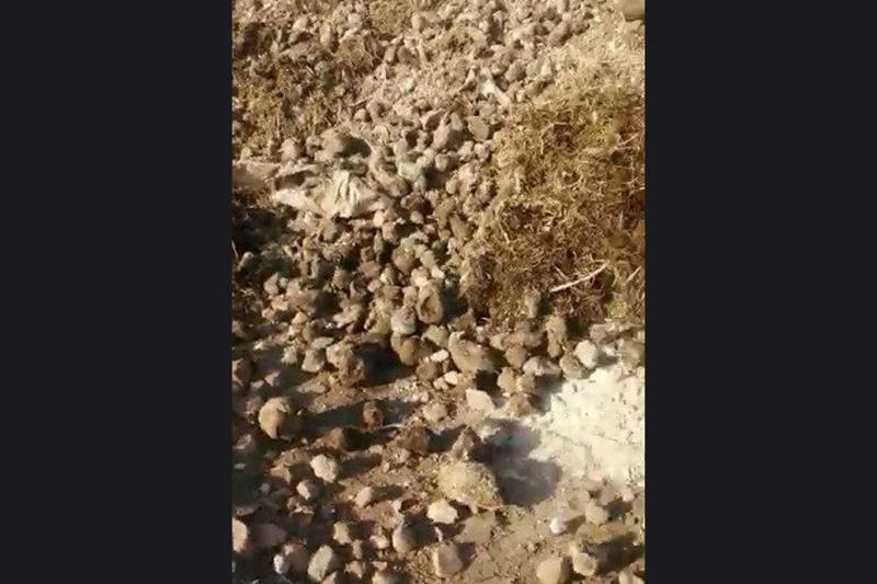 Elâzığ'da çürümeye terkedilen binlerce ton şekerpancarı imha edildi