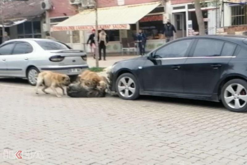Palu` da Sokak köpekleri çarşı ortasında öğrencilere saldırdı