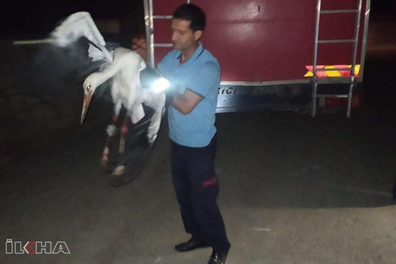 Palu`da Elektrik tellerine takılı leylek itfaiye tarafından kurtarıldı